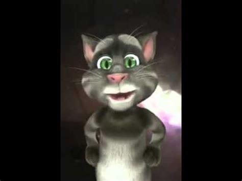 imagenes wasap groseras el gato del wasap youtube