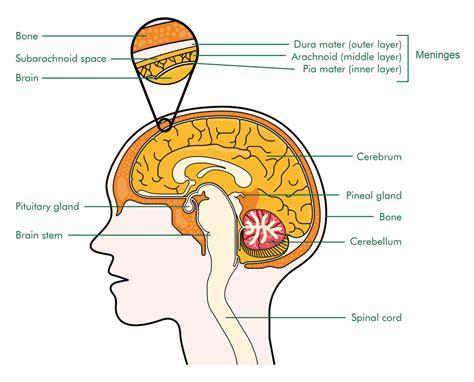 brain tumor diagram tumor symptoms symptoms brain tumor left side