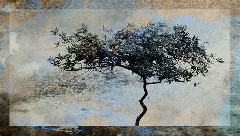 Tree Duvet Cover Twisted Tree Digital Art By David Ridley
