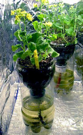 Grow Plants in Bottles   My Farming Secrets
