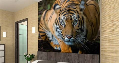 tiger wall murals crouching tiger wall paper dezign with a z