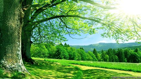 Background Images Nature   PowerPoint Backgrounds for Free
