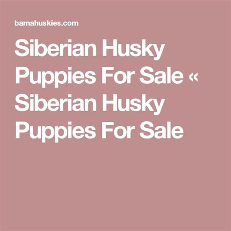 pomeranian husky mix puppies for sale in tennessee best 25 husky puppies for sale ideas on huskies for sale pomeranian