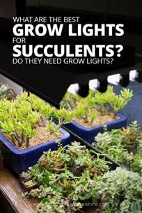 grow lights for choosing the right grow light do you need a grow light