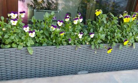 terrazzi fioriti balconi e terrazzi fioriti giardini dinamici