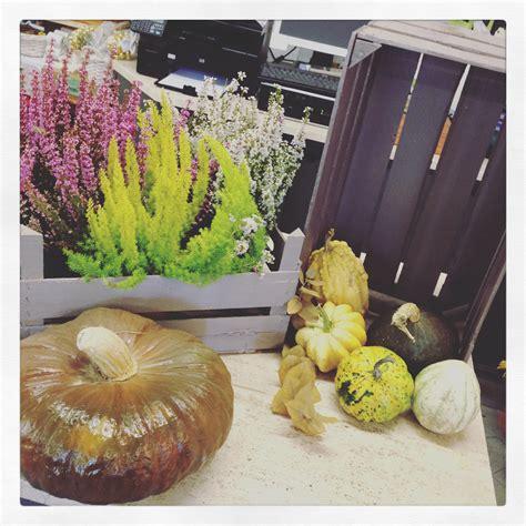 decorare zucche di halloween fiori e zucche per decorare casa ad halloween la ricetta