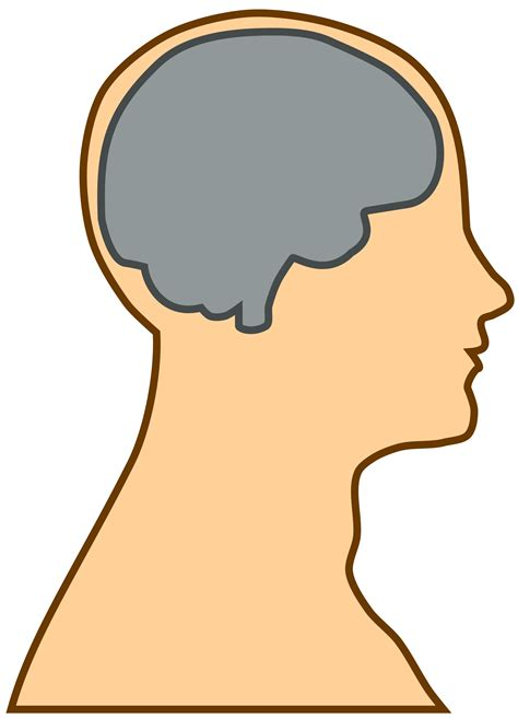 brain clipart big image png