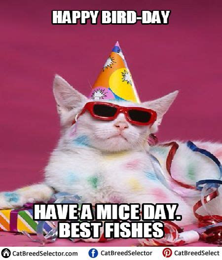 Cat Birthday Memes - 25 best ideas about happy birthday cats on pinterest