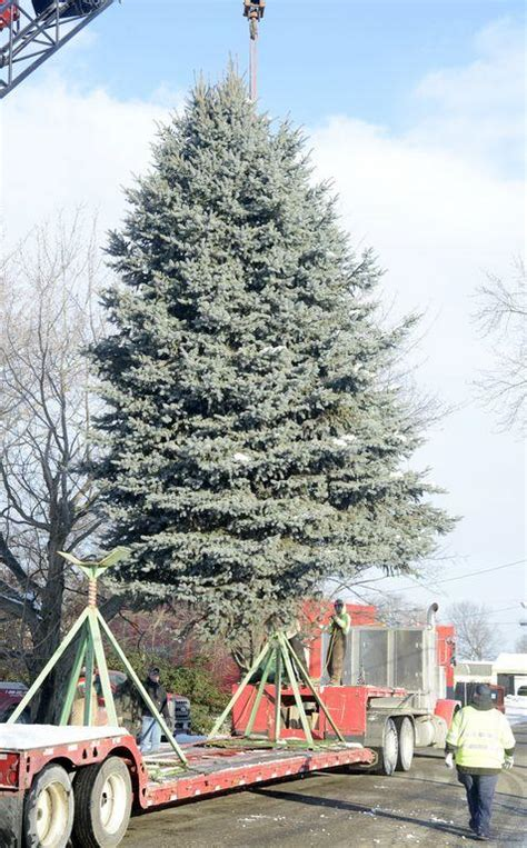 light up downtown canton canton couple donates spruce for light up downtown news
