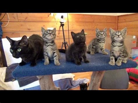 sofa that cats won t mama cat won t dance with her kittens youtube