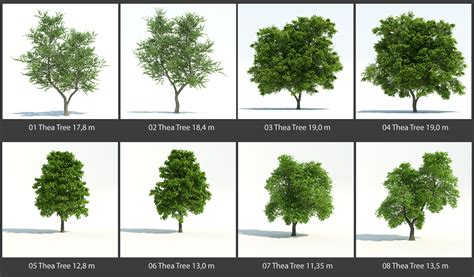 Home Designer Architectural 2015 Free Download by Freedeelab Trzydelab I Made Some New 3d Trees
