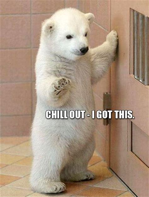 Cute Baby Animal Memes - 30 funny animal captions part 11 30 pics amazing creatures