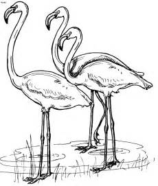 flamingo coloring page flamingos coloring pages to