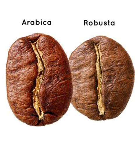 One Bean Coffee Specialty Arabica Toraja Perindingan arabica vs robusta which one is better