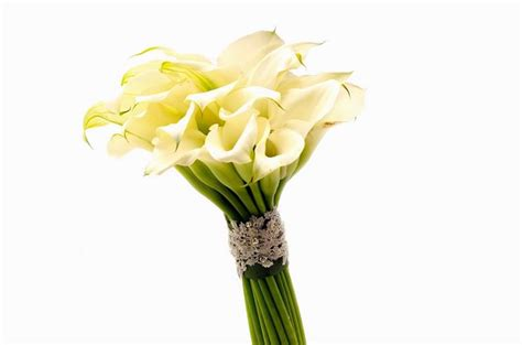 colore dei fiori significato significato calla significato fiori linguaggio dei