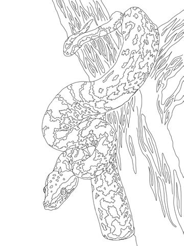 african rock python coloring page super coloring