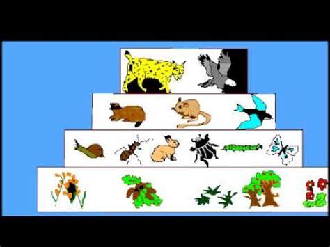 cadena alimenticia acuatica maqueta cadenas alimenticias y piramides ecologicas youtube
