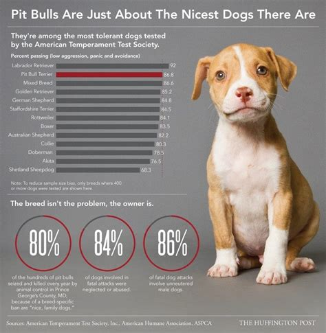 how to raise a puppy when you work how to raise a pitbull tips from one owner to another