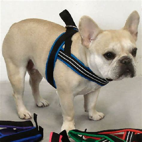 comfort flex dog harness comfortflex sport dog harness from golly gear