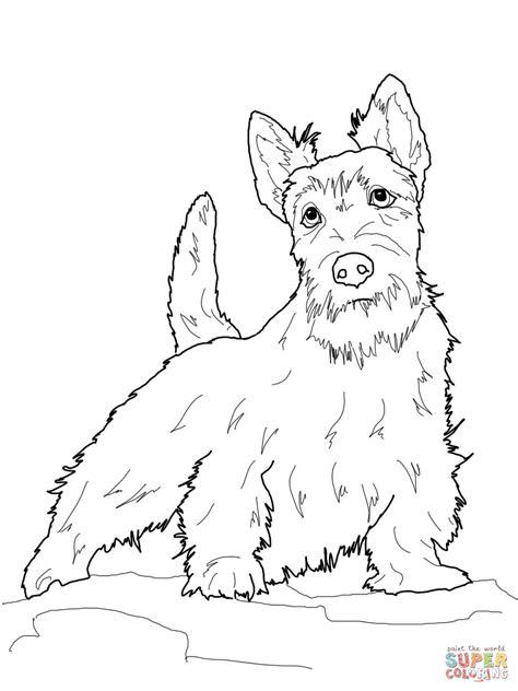 scottie dog coloring page scottish terrier coloring page free printable coloring pages