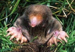 How To Get Rid Of A Groundhog In My Backyard Biotopo Adaptaciones Al Medio Terrestre A 233 Reo Y Acu 225 Tico