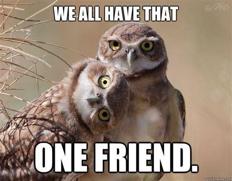 Funny Owl Meme - funny owl memes google search raising chickens humor