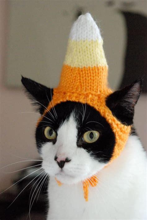 cat in hat cat friday cats in hats bloglander