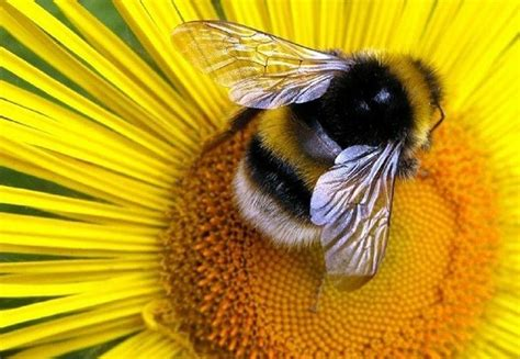 special abilities and brightly colored bumblebees fed high doses of neonicotinoids in laboratory