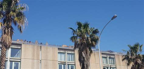 regione sicilia sede la sede consorzio asi palermo verr 224 acquistata dalla