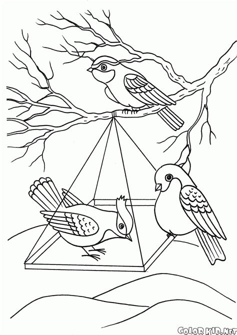 winter bird feeder coloring page coloring pages