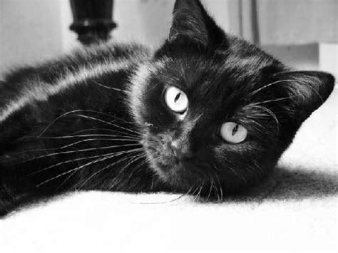 desktop wallpaper black cats wallpaperswide9 free hd desktop wallpapers
