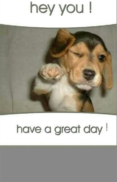 Have A Great Day Meme - have a great day pinterest things i love