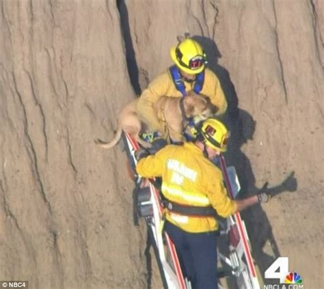 Traffic On Pch - smoky the dog falls 50 feet down a cliff crevice after chasing a squirrel and has to