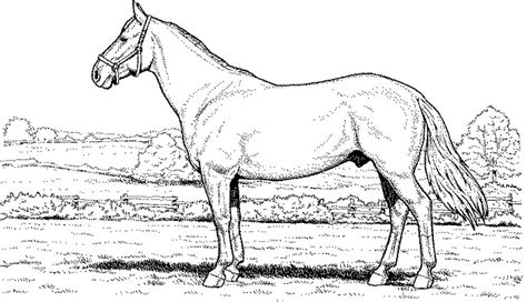 Arabian Horse Coloring Pages Print Murderthestout Arabian Coloring Pages
