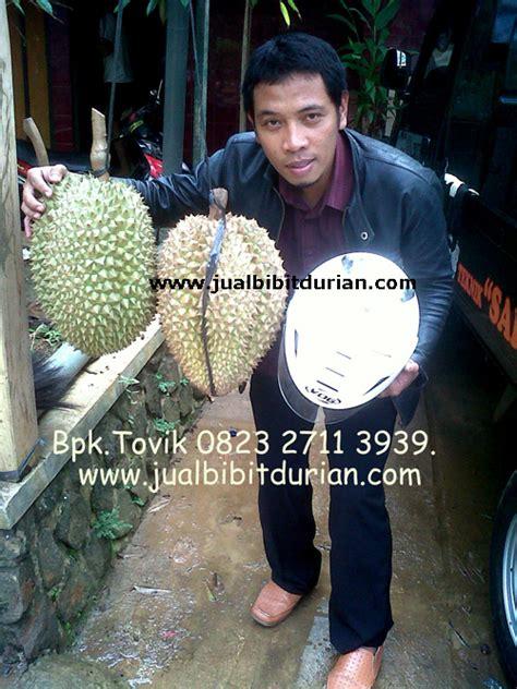 Bibit Durian Bawor Banjarnegara durian bawor kaki 3 bibit durian montong bibit durian