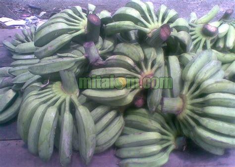 manfaat tanaman pisang