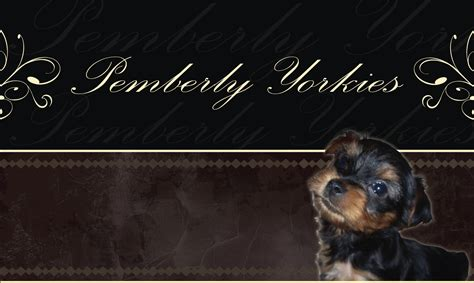 pemberly yorkies pemberly yorkies home mesa az
