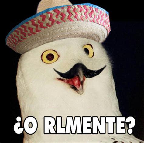 O Really Meme - o rly internet meme owl o rlmente o rly pinterest