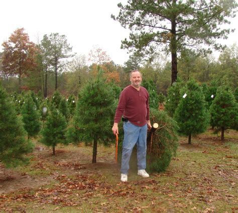 100 christmas tree farms in arkansas peltzer pines