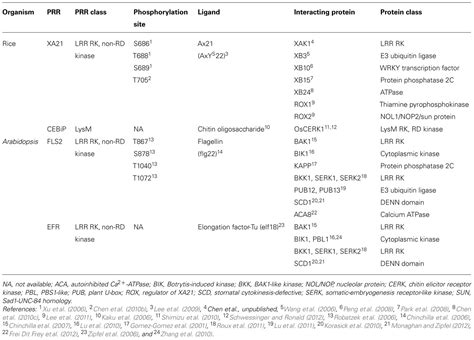 pattern recognition receptors in plants frontiers protein phosphorylation in plant immunity