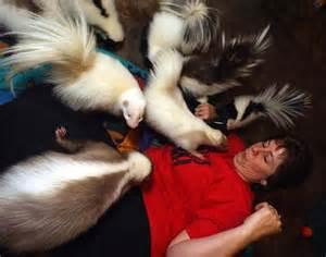 skunks as pets