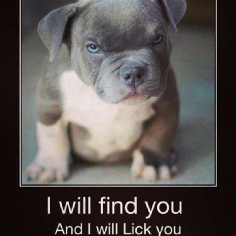 Cute Puppies Memes - cute puppy meme tumblr image memes at relatably com