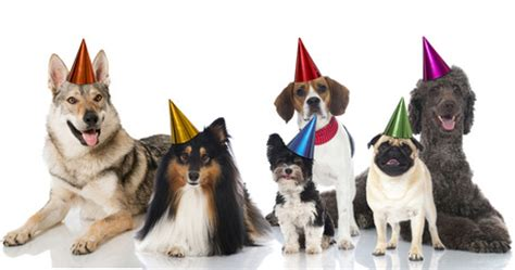 how to throw a dog birthday party dogtime