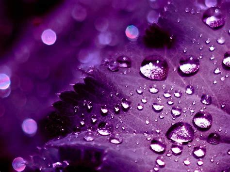 pretty cool wallpapers 3d purple wallpapers