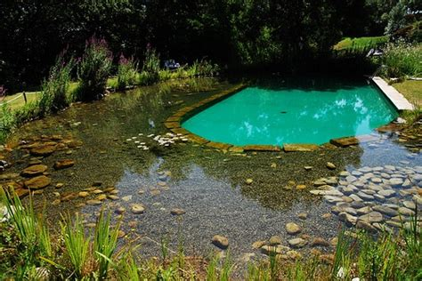 natural pool timeless environments inspiration green