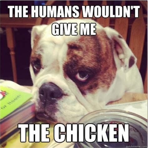 Worlds Funniest Meme - life and times of a dog the struggle is real 20 pics