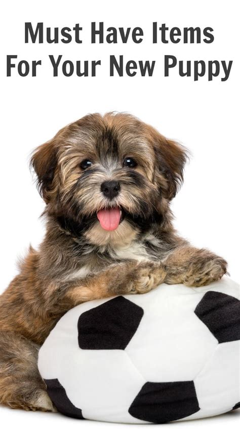 your new puppy must items for your new puppy