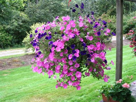 Hanging Flower Baskets And Container Gardening Hanging Flower Garden