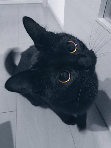 Cat Kuku black cat kuku 24 february 2017 grape cats