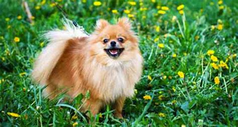 Minimize Shedding by Dogs Minimize The Shedding Essential Springtime